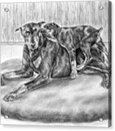 Patience - Doberman Pinscher And Puppy Print Acrylic Print by Kelli Swan