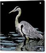 Patience On Little Lake Acrylic Print