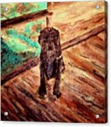 Patient Dog Acrylic Print