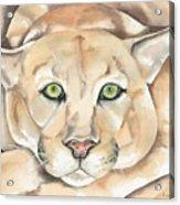 Patient Kitty Acrylic Print
