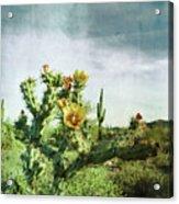 Patina Green Desert Bloom Acrylic Print