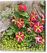 Patio Container Garden Acrylic Print