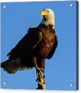 Patriot Guard Acrylic Print