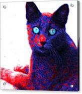 Patriotic Cat Acrylic Print