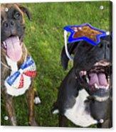 Patriotic Pups Acrylic Print