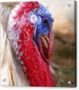 Patriotic Turkey Acrylic Print