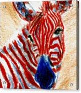 Patriotic Zebra Aceo Acrylic Print