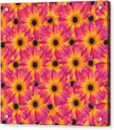 Pattern Of African Daisies Acrylic Print