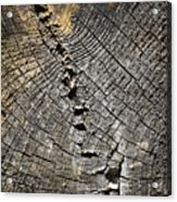 Pattern On An Old Stump Acrylic Print