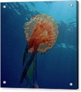 Patterned Luminescent Jellyfish Acrylic Print by Sami Sarkis