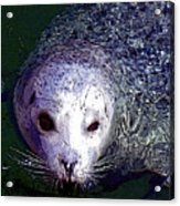 Patterned Seal Acrylic Print
