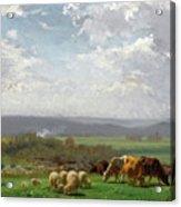 Paturage En Auvergne Acrylic Print