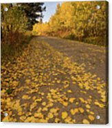 Paved In Gold Acrylic Print