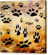 Paw Prints Acrylic Print by Andee Design