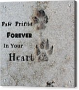 Paw Prints Forever In Your Heart Acrylic Print