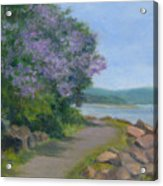 Paulownia Along The Nyack Trail Acrylic Print