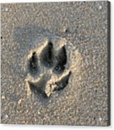 Pawprint In The Sand Acrylic Print