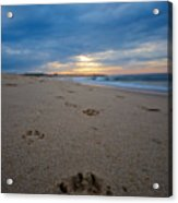 Pawprints Acrylic Print by Mike Horvath