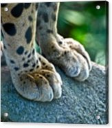 Paws For Effect Acrylic Print