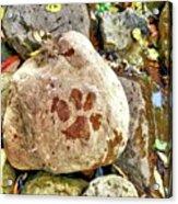Paws On The Rocks Acrylic Print