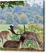 Peace And Quiet Acrylic Print