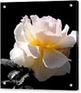 Peace Rose Inner Light Acrylic Print