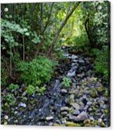 Peaceful Flowing Creek Acrylic Print