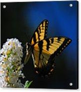 Peaceful Moment Acrylic Print