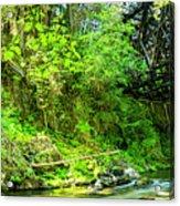 Peaceful Small Creek Under Kinsol Trestle, Vancouver Island, Bc, Canada 1. Acrylic Print
