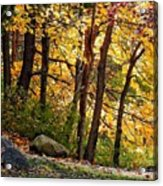 Peaceful Trees Acrylic Print