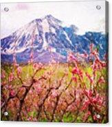 Peach Blossoms And Mount Lamborn II Acrylic Print