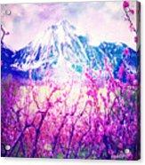 Peach Blossoms And Mount Lanborn Vi Acrylic Print