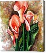 Peach Callas Acrylic Print