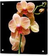 Peach Orchids Acrylic Print