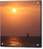 Peach Sunrise And Bird In Flight Acrylic Print