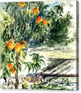 Peach Tree Acrylic Print