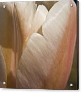 Peach Tulip Acrylic Print