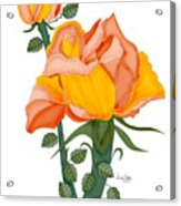 Peaches And Creme Acrylic Print