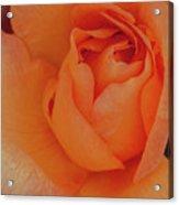 Peachy Acrylic Print
