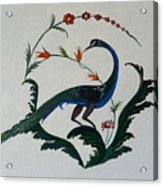 Peackok Acrylic Print