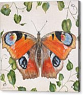 Peacock Butterfly-jp3878 Acrylic Print