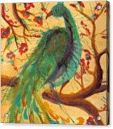 Peacock C'hi Acrylic Print