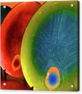 Peacock Colors Acrylic Print by Farah Faizal