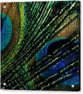 Peacock Eyes Acrylic Print