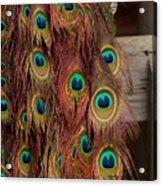 Peacock Fall Acrylic Print