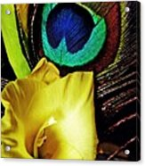 Peacock Feather And Gladiola Acrylic Print