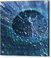 Peacock Feather Macro Waterdrops Acrylic Print