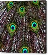 Peacock Feathers Upside Down Acrylic Print
