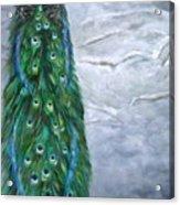 Peacock In Winter Acrylic Print