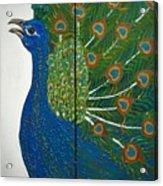 Peacock Iv Acrylic Print